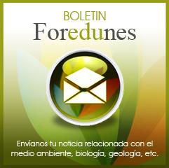 boletin-foredunes